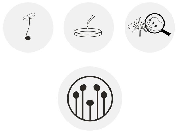 desarrollo de logotipo herbera